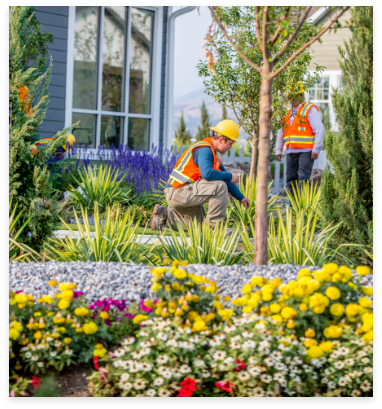Residential Plantings crew installing new landscape